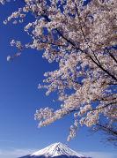 桜・紅葉・お花見が好き