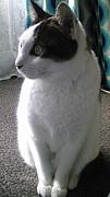 うちのニャンコは捨て猫でした!