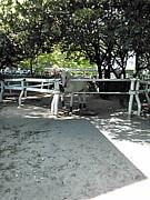 関西学生競馬サークル