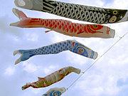 魚座の雉サポ