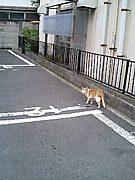 成城大学無人島サークル