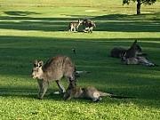 オーストラリアで留学・ワーホリ