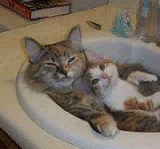 函館猫好き