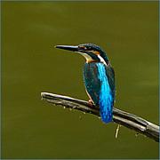 Lavista野鳥部