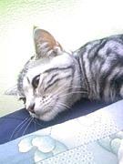 -愛猫党-猫大好き倶楽部