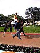 ロマン輝く競馬