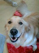 ☆I LOVE DOG☆