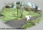 NHK早朝4:13の映像