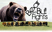 Bear And Bull Fights