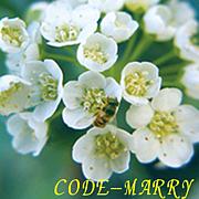 CODE-MARRY (コードマリー)