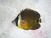 熱帯魚採集 in 浜名湖