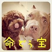 命どぅ宝☆愛犬家の会