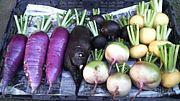 西洋野菜・地方野菜