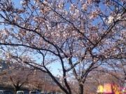 ☆彡The Four Seasons☆彡