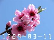 ☆1989年3月11日生まれ☆