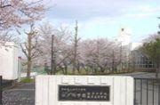 江戸取硬式テニス部