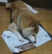 犬猫ニュース!LOVE犬猫情報