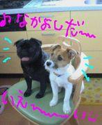 関東黒パグ会♪