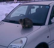 猫ワールド(ΦωΦ)