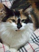 おすすめ★猫グッズ Cat's Ring