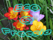ECO@Freesia