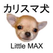 カリスマ犬 Little MAX