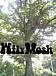 Wily Mosh(ワイリー モッシュ)
