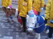 京都競馬場のポニーを愛でる会