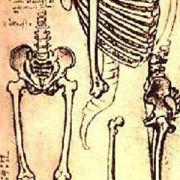 僕の、私の、股関節