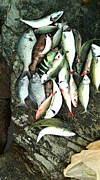 沖縄中部の釣り人倶楽部☆