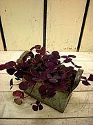 * Shabby & Junk × Plants *