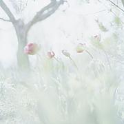 花雫 −花の想い−