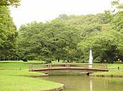 代々木公園チャリジョグピクニク