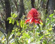 Australian Bush FlowerEssences
