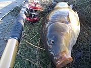 ボイリーで鯉釣り