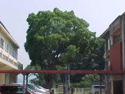 金山小学校