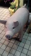 細専☆白豚隊