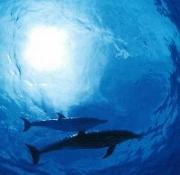 海の生物・全般