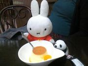 miffy in my life
