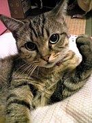 新興宗教☆眠る魔法猫みみたす教