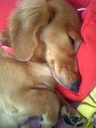 寝ながらミクシイ☆