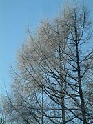 森林インストラクター 森の会