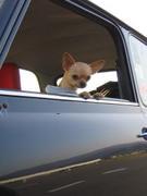 イヌ好きミニ乗りさん♪