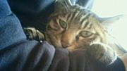 猫で暖をとる。