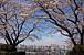 多摩市聖蹟桜ケ丘