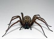 クモが怖い・嫌い (゚_゚);