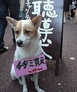 CAPC−犬部ー