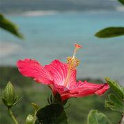 沖縄平和研究会 2009