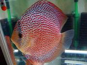 熱帯魚総合情報掲示板