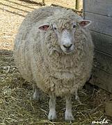 すべる愉快な子羊達の動物図鑑